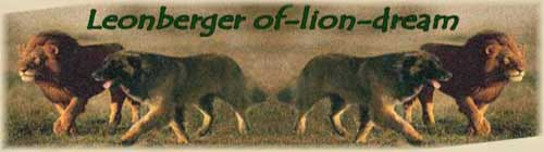Banner of-lion-dream